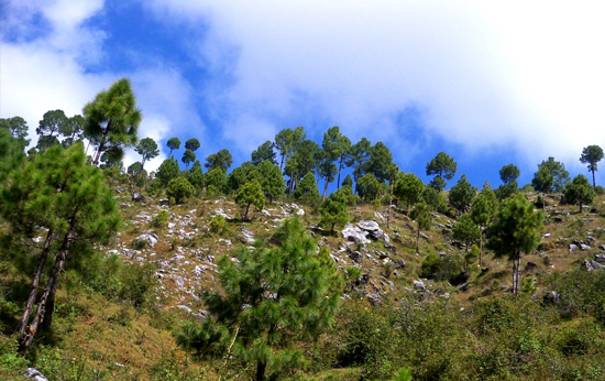 Ranikhet Travel